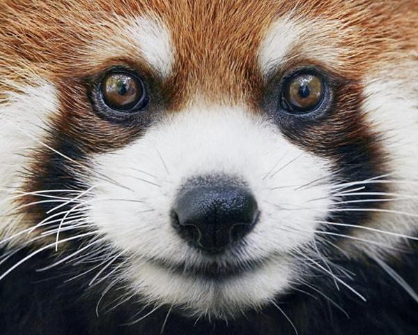 pic หรือนี่จะเป็นภาพสุดท้าย !! รวมภาพสัตว์ที่กำลังจะสูญพันธุ์ไปจากโลก