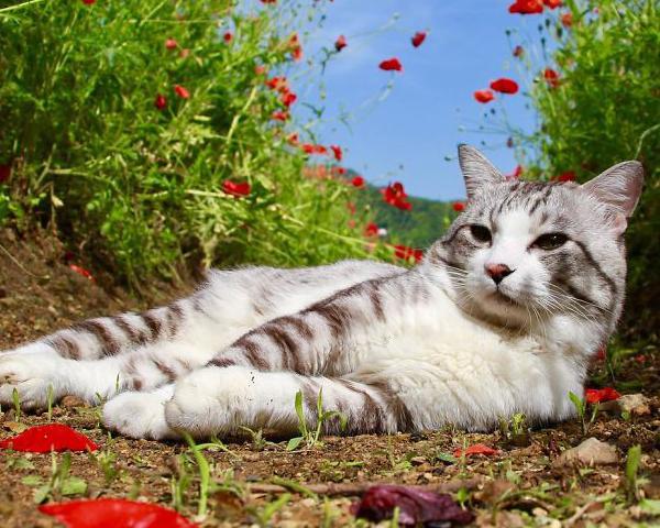 ส่องเจ้าแมวสุดคูลที่ไม่ว่าจะโดนถ่ายจากมุมไหนก็ดูดีแบบสุดๆ