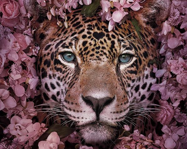 สัตว์ป่าสุดน่ารักที่อาจหลงเหลือไว้ให้แค่เพียงภาพจำ