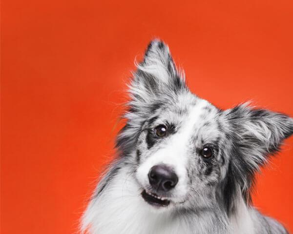5 เคล็ดลับในการสอนเด็ก ๆ ให้เล่นกับสุนัขอย่างปลอดภัย
