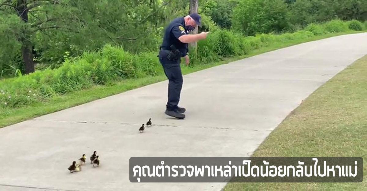สุดน่ารัก-คุณตำรวจ-นำทาง-ลูกเป็ด-กลับไปหาแม่