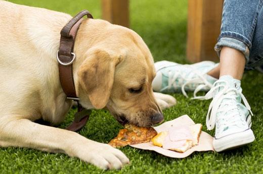 5-เคล็ดลับ-สอนเด็ก-ให้เล่นกับ-สุนัข-อย่างปลอดภัย